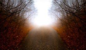 Straße durch nebelhaften Wald Stockfotos