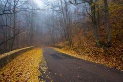 Straße durch nebelhaften Wald Stockbilder