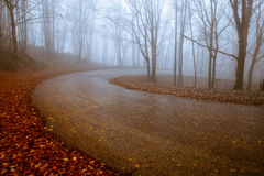 Straße durch nebelhaften Wald Lizenzfreies Stockfoto