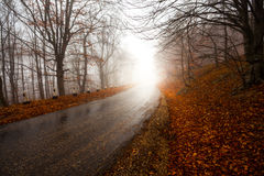 Straße durch nebelhaften Wald Stockfotografie