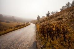 Straße durch nebelhaften Wald Lizenzfreies Stockbild