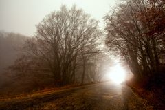 Straße durch nebelhaften Wald Lizenzfreie Stockfotografie