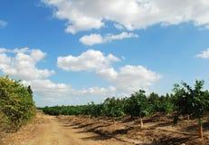 Straße durch orange Obstgarten Lizenzfreies Stockfoto