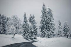 Straße durch schneebedeckten Wald Stockbild