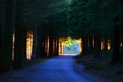 Straße durch tiefen Wald Stockfoto