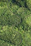 Straße durch Wald. lizenzfreie stockfotografie