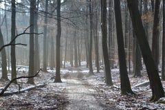 Straße durch Wald des verschneiten Winters Stockbild