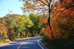 Straße durch Wald im Herbst Stockfoto