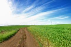 Straße durch Weizen-Felder Stockbilder