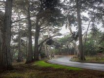 Straße durch Zypressenwald Lizenzfreie Stockbilder