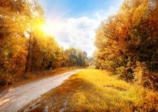 Straße in einem bunten Herbstwald Lizenzfreies Stockfoto