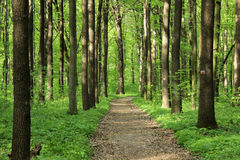 Straße in einem grünen Wald Lizenzfreie Stockfotografie