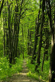 Straße in einem grünen Wald Stockfotografie