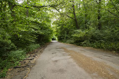 Straße in einem Laubwald Stockfotos