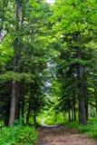 Straße in einem Misch- Wald in Mittel-Russland stockfoto