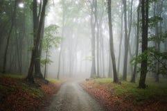 Straße in einem nebeligen Wald der geheimnisvollen Fantasie Lizenzfreies Stockfoto