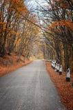 Straße in einem roten Herbstwald Lizenzfreies Stockfoto