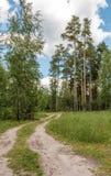 Straße in einem Wald Lizenzfreies Stockfoto