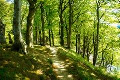 Straße in einem Wald Lizenzfreie Stockfotografie