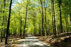 Straße in einem Wald Lizenzfreie Stockfotos