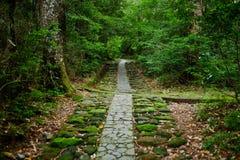 Straße in einem Wald Lizenzfreies Stockbild