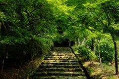 Straße in einem Wald Stockfotos