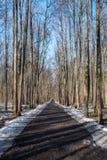 Straße in einem Wald im Vorfrühling stockfoto