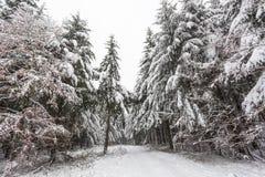 Straße in einem weißen Winterwald Stockbild