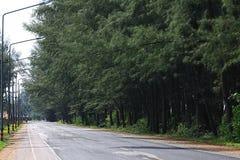 Straße entlang dem Wald Stockfoto