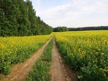 Straße entlang dem Wald durch das Feld stockfoto