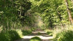 Straße entlang den Wäldern stock video