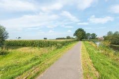 Straße entlang einem Nebenfluss und ein Feld mit Silomais Lizenzfreies Stockfoto