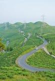 Straße entlang Teeplantage auf dem Berg Stockfotografie