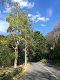 Straße führt zu Hügel Lizenzfreie Stockbilder