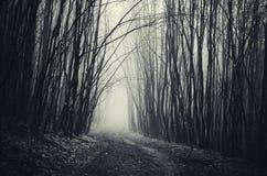 Straße in frequentiertem Halloween-Wald mit Nebel Stockbilder