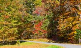 Straße gestaltet durch bunte Herbstbäume im dichten Dickicht lizenzfreie stockfotos
