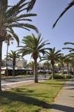 Straße gestaltet mit Palmen von der Rethymno-Stadt von Kreta in Griechenland lizenzfreie stockfotografie
