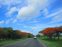 Straße in Guanacaste Costa Rica, Tourismus stockfotos