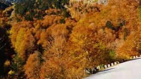 """Straße in Herbst †""""Fahrzeug-Gesichtspunkt"""