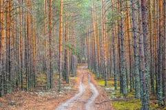 Straße im dichten Kiefernwald Stockbild