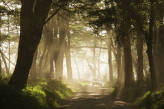 Straße im Dschungel Lizenzfreies Stockbild