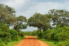 Straße im Dschungel Stockfotos