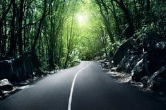 Straße im Dschungel Stockbild