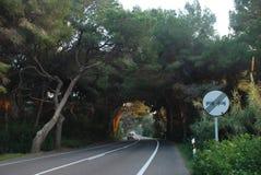 Straße im Dschungelbaum lizenzfreies stockfoto