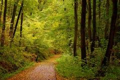 Straße im Fallwald Stockfotos