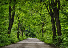 Straße im grünen Wald Stockfoto