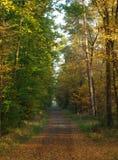 Straße im Herbst Stockbild