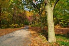 Straße im Herbst lizenzfreie stockfotografie