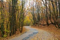 Straße im Herbstwald Stockfoto