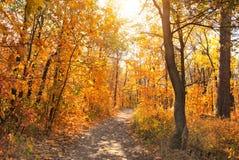 Straße im Herbstwald lizenzfreies stockbild